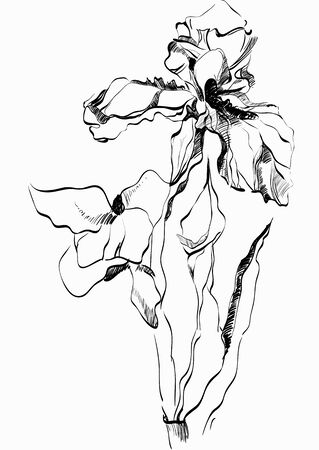 iris flower: Iris flower Stock Photo