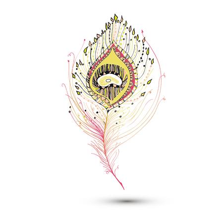 piuma di pavone: peacock feather in white background. Archivio Fotografico
