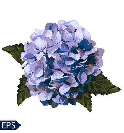 Vector blue realistic hydrangea, lavender. Illustration of flowers. Vintage. Can be used for gift wrapping paper.