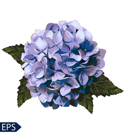 Vector realistische blauwe hortensia, lavendel. Illustratie van bloemen. Vintage. Kan gebruikt worden voor cadeaupapier.