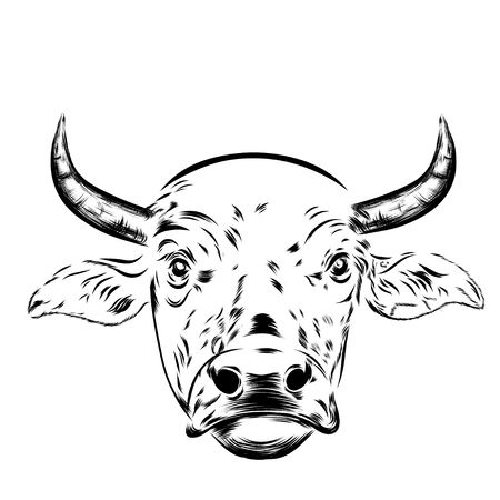 head shot: Black and white sketch of a asian cows face. Vector portrait. EPS