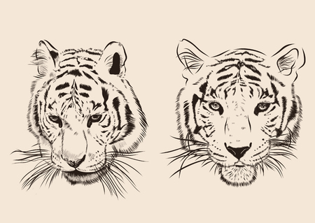black and white image drawing: Original artwork tiger with dark stripes, isolated on white background, and sepia color version, outline llustration.