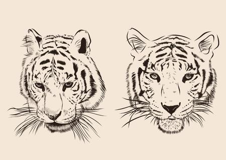 silueta tigre: Original tigre obra con rayas oscuras, aisladas sobre fondo blanco, y versión en color sepia, bosquejo llustration.