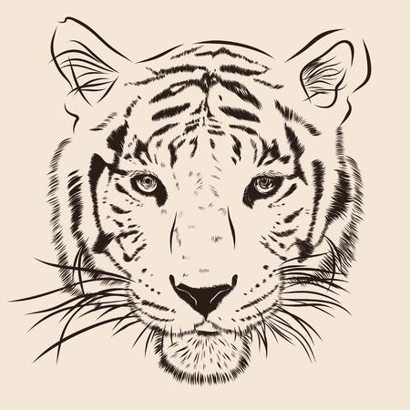 베이지 색 배경에 고립 된 검은 줄무늬가있는 원본 삽화 호랑이, 세피아 컬러 버전, llustration합니다. 스톡 콘텐츠