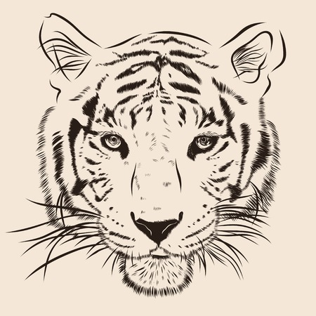 black and white image drawing: Original artwork tiger with dark stripes, isolated on beige background, and sepia color version, llustration.