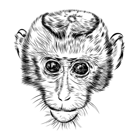 abstract gorilla: Sketch monkey face. Hand drawn of a doodle illustration.