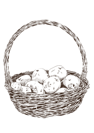 fruit basket: potatoes in a wicker basket on a white background. Vector illustration EPS