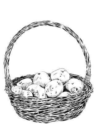 wicker basket: potatoes in a wicker basket on a white background. Vector illustration EPS