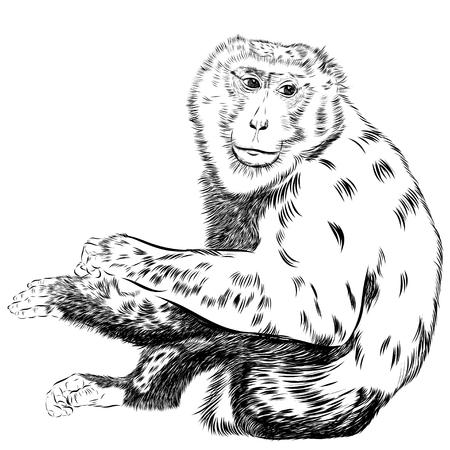 vecteur de dessin Chimpanzé. dessin artistique d'un animal, utiliser pour votre conception. EPS