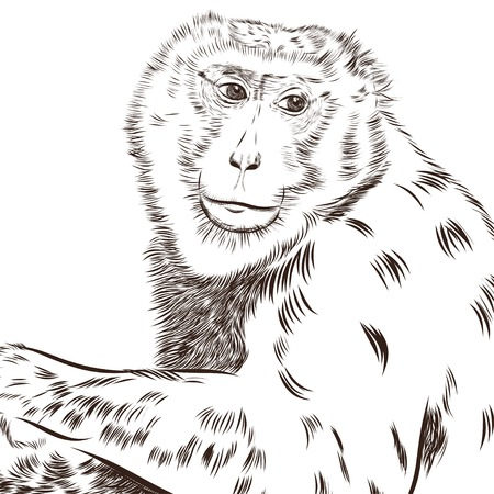 scetch: Chimpanzee drawing vector. Animal artistic drawing, use for your design. EPS