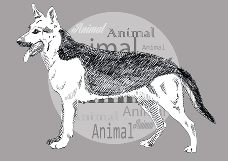chasing tail: German Shepherd hand drawn vector isolated on white background. EPS