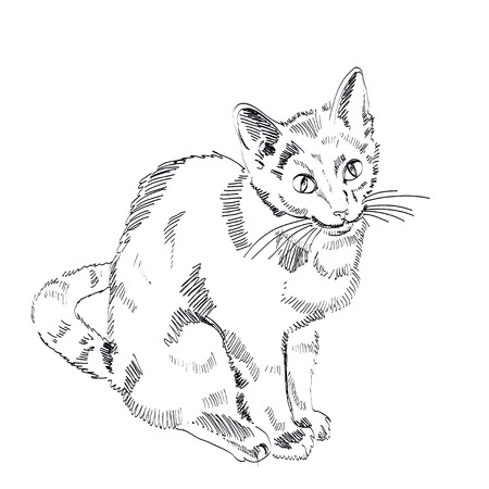 russian blue: The Russian Blue Cat on a white background. Illustration