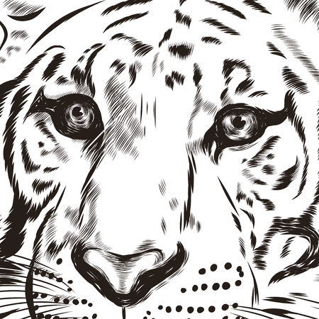 head wise: Tiger scetch hand drawn on background. Illustration