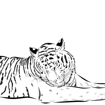 Tiger scetch hand drawn on background. Illustration