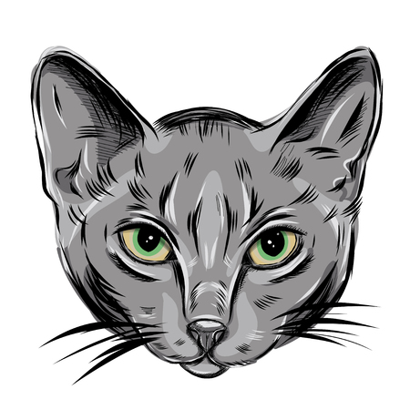 green eyes: Vector Portrait of Domestic Cat. Russian Blue Cat. Cute young kitty with green eyes. EPS Illustration