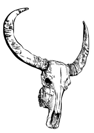 Cow skull- hand drawn vector illustration, isolated on white. Illustration
