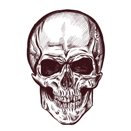 anatomía cráneo mano dibujada con diferentes tonos y líneas. Vector