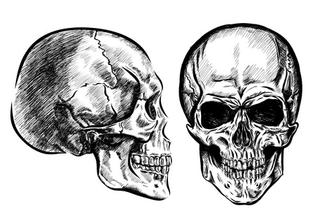 scetch: hand drawn anatomy skull with different tones and lines. Vector