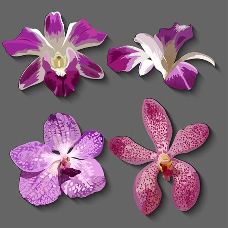 autumn woman: hand drawn vector floral set with realistic orchids.