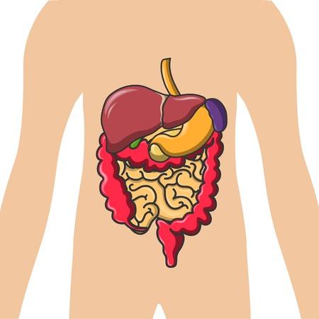 small intestines: Vector human organs icon set illustration.
