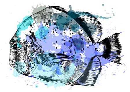 preparation: Watercolor sketch of  fish. Illustration