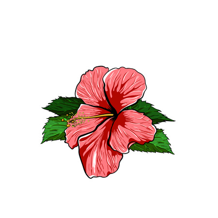 scrap book: Tropical Flower hibiscus on a white Background. Vector EPS