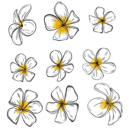 Colorful Frangiapani flowers Set on background. Vector Stock Photo