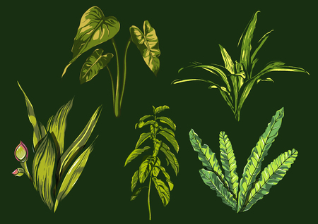 Tropical leaves, dense jungle. collection. hand painted pattern. Vector. Illustration