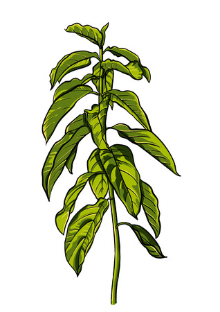Tropical leaves dense jungle hand painted pattern Illustration
