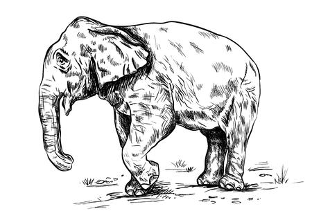 Old big elephant on the white background. Illustration