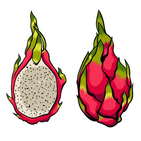 white fabric texture: Exotic vector Dragon fruits on the bright white background.