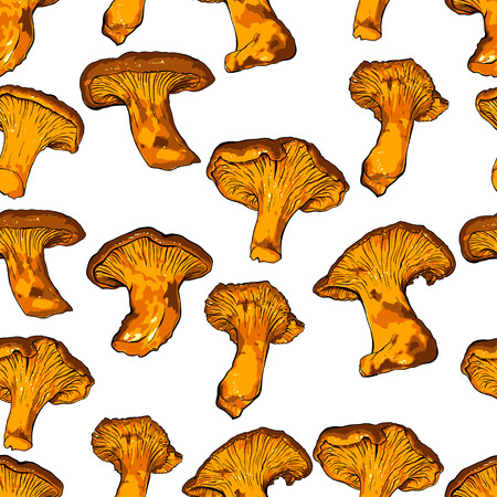 vector illustration of various fungi Chanterelle.