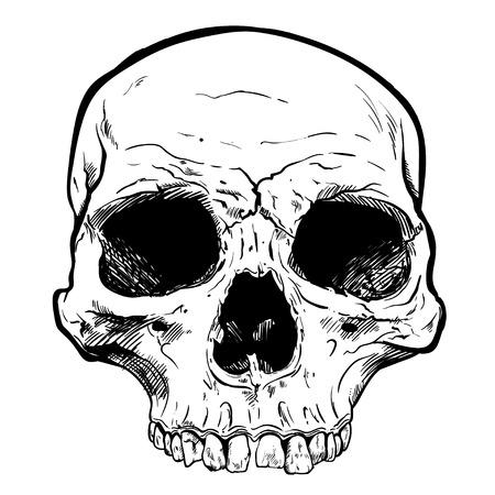 Human Skull Vector Art. Detailed hand drawn illustration of skull on white background. Иллюстрация