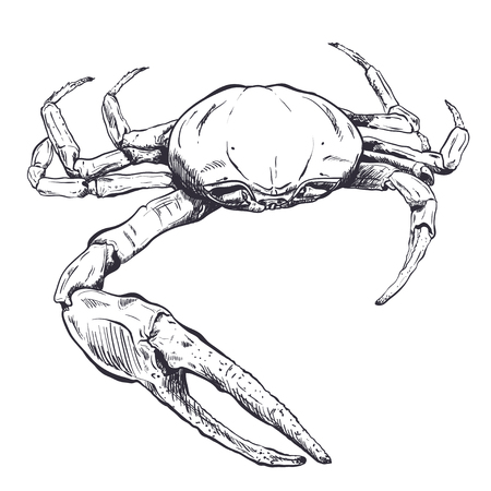 Ghost Crab Stock Photos And Images