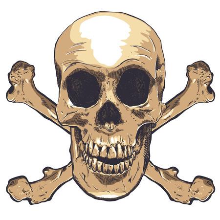 dientes sucios: Arte del vector del cráneo humano. Dibujado a mano ilustración.