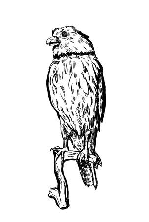 Hand drawn vector bird on white sitting on a branch