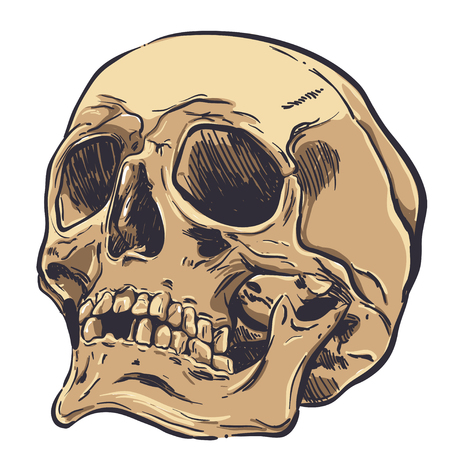 Human Skull Vector Art. Hand drawn illustration. Stockfoto - 107850654