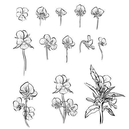 Violet forget-me-nots flower vector illustration colection set.
