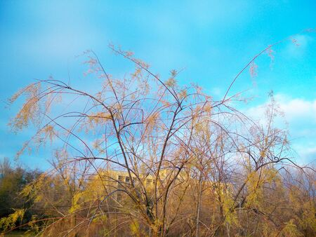 Beautiful tree or bush with yellow leaves in autumn park against blue sky