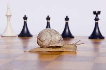 wooden vintage chessboard with snail and chessmans