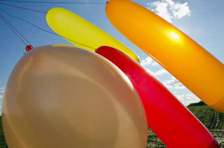 colorful balloons in the space and sunshine photo