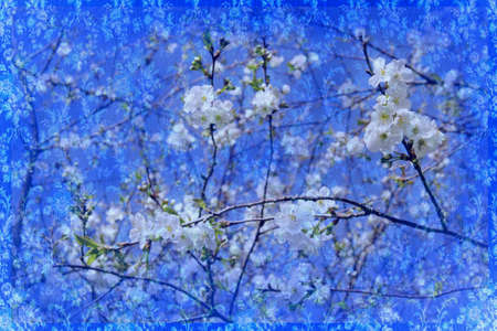 mixed blue background with cherry blossoms photo