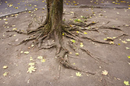urban yard tree roots with leaves photo