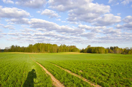 spring crop field and photografers shadow Stock Photo