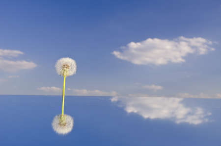 lonely dandelion clock on mirror and sky clouds photo