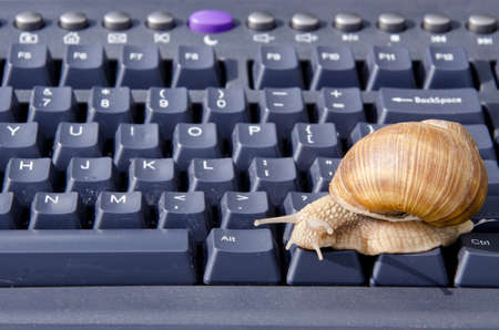 one snail on black computer keyboard