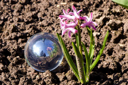orchideae: crystal ball and orchis in the spring garden