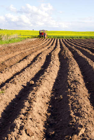 tillage: spring tillage in the ground and little tractor