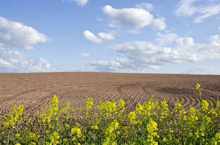 tillage: spring rapes blossoms and new tillage field Stock Photo