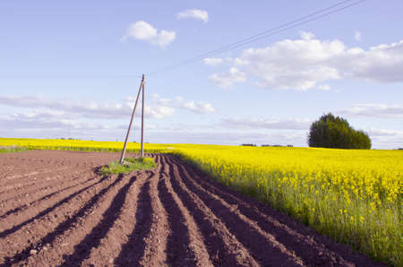 tillage: spring landscape with tillage and yellow rapes field Stock Photo